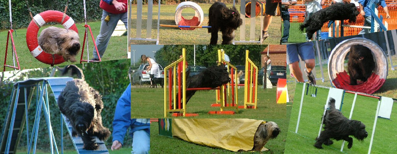 our Jumping BRIARDS